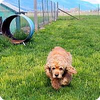 Adopt A Pet :: Erica - Creston, BC