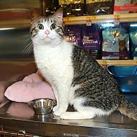 Adopt A Pet :: Uno - Rochester, MN