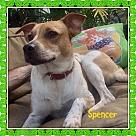 Adopt A Pet :: SPENCER