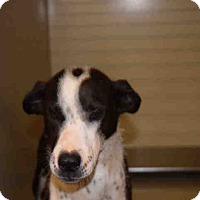 Adopt A Pet :: Jazzy - Newnan City, GA