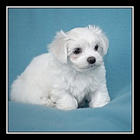 Adopt A Pet :: Almond Joy - Covina, CA