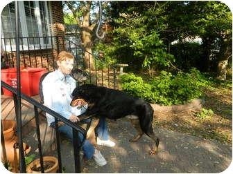 Rottweiler/Doberman Pinscher Mix Dog for adoption in West Deptford, New Jersey - Simon