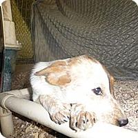 Adopt A Pet :: Dixie - Katy, TX