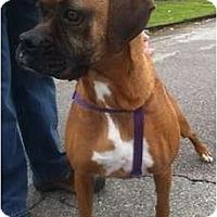 Adopt A Pet :: Rosie - Grafton, MA