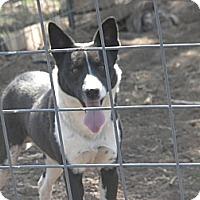 Adopt A Pet :: BUDDY - Childress, TX