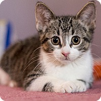 Adopt A Pet :: Mousie - Chicago, IL