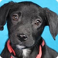 Adopt A Pet :: Zeke - Minneapolis, MN