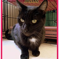 Adopt A Pet :: Mimi - Berkeley Springs, WV