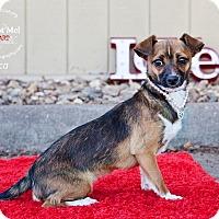 Adopt A Pet :: Oca (Goose) - Shawnee Mission, KS