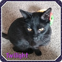 Adopt A Pet :: Twilight - Cedar Springs, MI