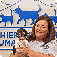 Adopt A Pet :: Sylvie - Cashiers, NC