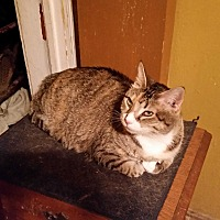 Adopt A Pet :: Mallory - Sharon Center, OH