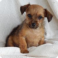 Adopt A Pet :: Mason (1.5 lb) Video - Sussex, NJ
