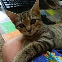 Adopt A Pet :: Mitch - Randleman, NC