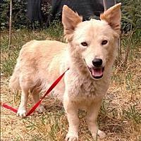 Adopt A Pet :: Gypsy - Encino, CA