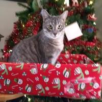 Adopt A Pet :: Dot - Richmond, VA