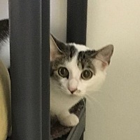 Adopt A Pet :: Tilly - Bourbonnais, IL