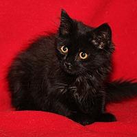 Adopt A Pet :: Jake - Marietta, OH