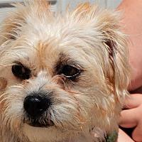 Adopt A Pet :: Bailee - Long Beach, NY