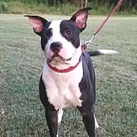 Adopt A Pet :: POLO - Walton County, GA