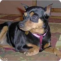 Adopt A Pet :: Muffin - Nashville, TN