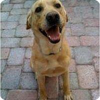 Adopt A Pet :: Red - Altmonte Springs, FL