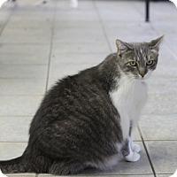 Adopt A Pet :: Maude - East Smithfield, PA