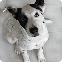 Adopt A Pet :: Denver - Yukon, OK