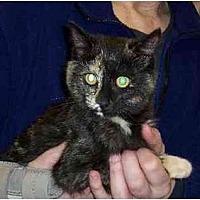 Adopt A Pet :: Mel - Stuarts Draft, VA