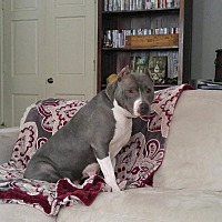 Adopt A Pet :: Ruby - Colonial Heights, VA