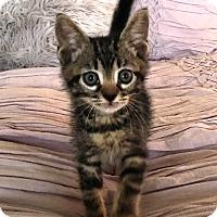 Adopt A Pet :: Twix - Orange, CA