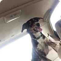 Adopt A Pet :: Aryssta - Chewelah, WA