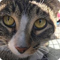 Adopt A Pet :: Menard - Rochester, MN