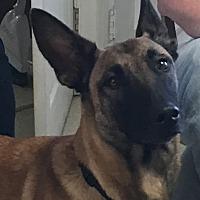 Adopt A Pet :: Lyric - LaGrange, KY