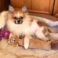 Adopt A Pet :: Carino - Delaware, OH