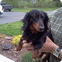 Adopt A Pet :: Annie - Killingworth, CT