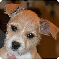 Adopt A Pet :: Caroline - Greensboro, NC