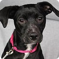 Adopt A Pet :: Gigi - Minneapolis, MN