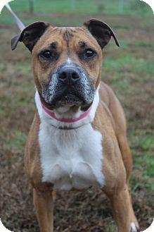 Boxer Mix Dog for adoption in Waldorf, Maryland - Guinevere
