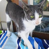 Adopt A Pet :: Bernise - N. Billerica, MA