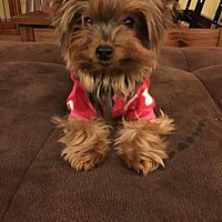 Adopt A Pet :: Mr. Pippen - Fremont, CA