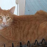 Adopt A Pet :: JJ - Lacon, IL