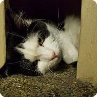 Adopt A Pet :: Vinny - Elyria, OH