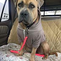 Adopt A Pet :: Aaliyah - Acushnet, MA