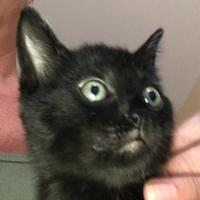 Adopt A Pet :: Storm - Burlington, NC