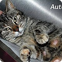 Adopt A Pet :: Autumn - Chilhowie, VA