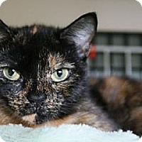 Adopt A Pet :: Reese - Frederick, MD