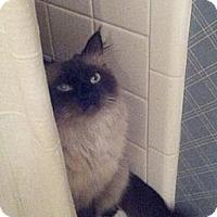 Adopt A Pet :: Latte - Columbus, OH