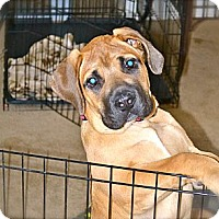 Adopt A Pet :: Rogue-Adoption Pending - Phoenix, AZ