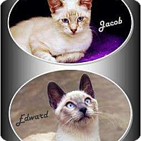 Adopt A Pet :: Edward and Jacob - Encinitas, CA